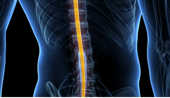 Engineering a spinal cord repair kit